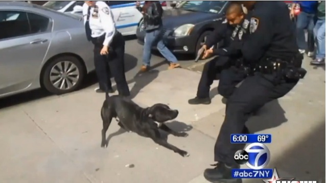 NYPD Officer Shoots At A Dog In A Crowd Of People!