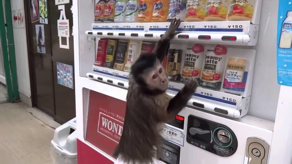 Monkey Buys Juice From Vending Machine