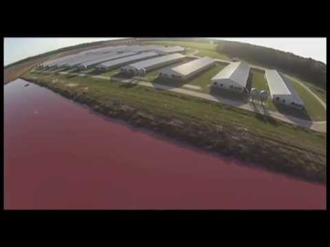 Factory Farms Exposed